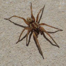 Уничтожение пауков в Уссурийске